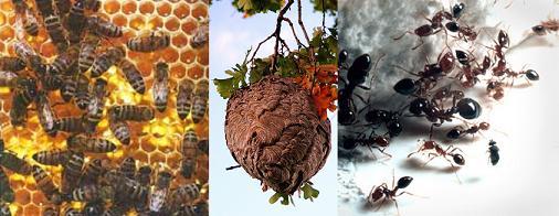 bees-ants.jpg