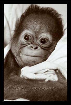 cute-baby-chimp.jpg