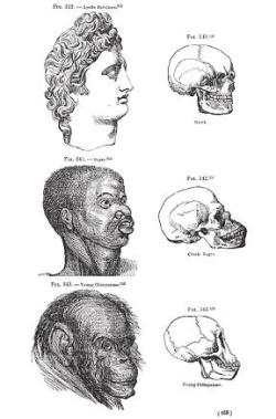 """Greek,"" ""Negro,"" & Chimp (skulls presented by Nott & Gliddon - 1854) (from J. Eberhardt article)"
