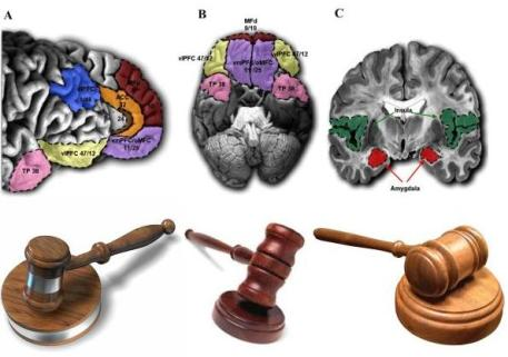 law-brain-image.jpg