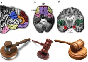law-brain-image